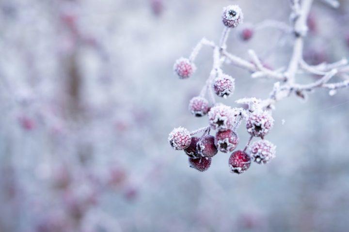 「希望」を意味する花言葉を持つ花3選《冬の花》