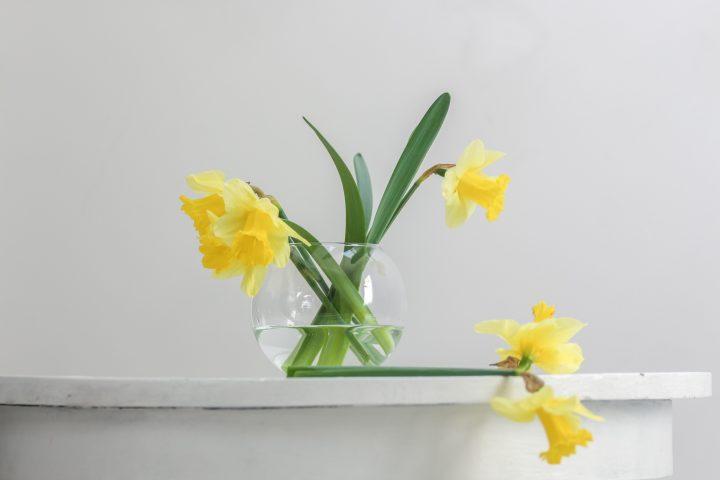 縁起と香りが良い、冬の花「水仙」