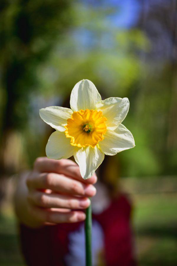 冬の寒さにも負けずに花を咲かせる