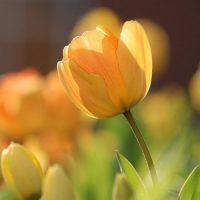 ガーデニングで花壇を「春らしく」華やかに。初心者にもおすすめの植物をご紹介