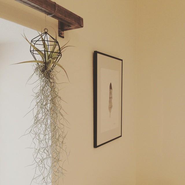 北欧インテリアにおすすめの観葉植物15