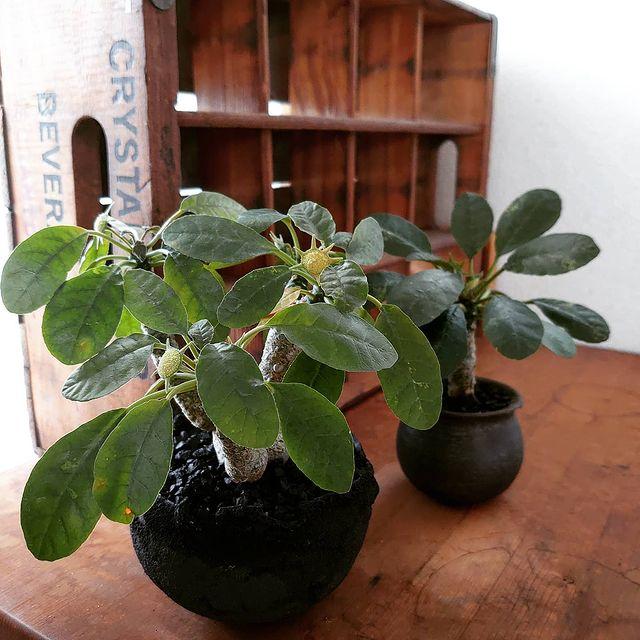 観葉植物12