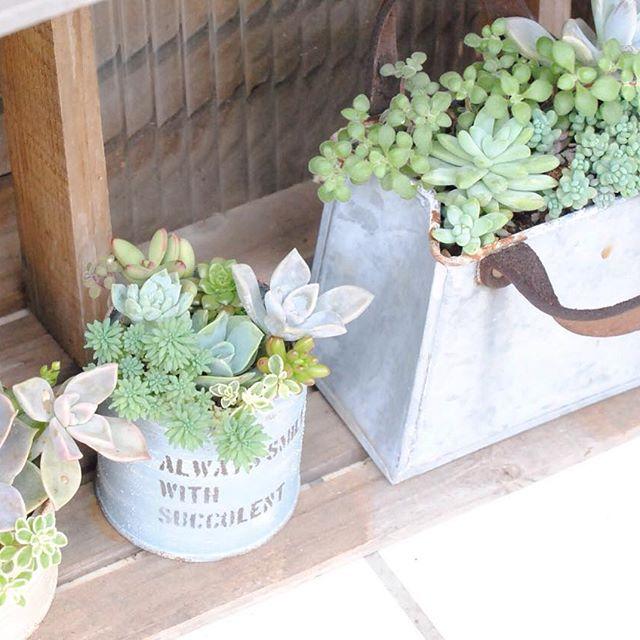 風水 多肉植物 玄関2