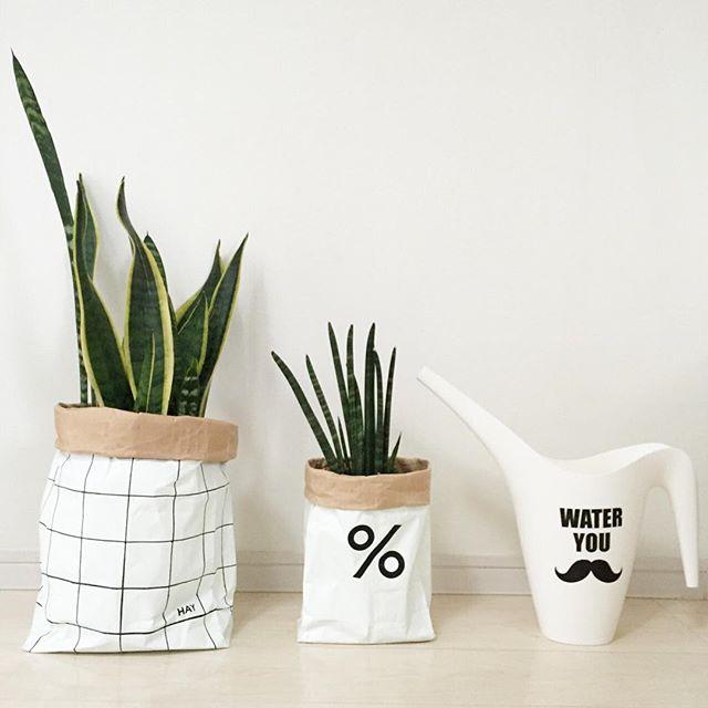 風水 多肉植物 リビング2