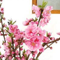 赤い花の花言葉といえば?素敵な意味が込められた植物を春夏秋冬別にご紹介