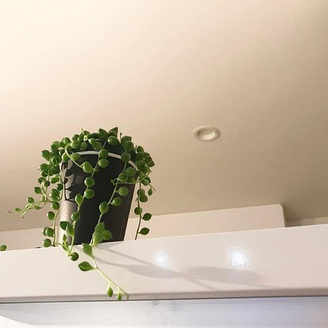 風水 多肉植物 寝室3