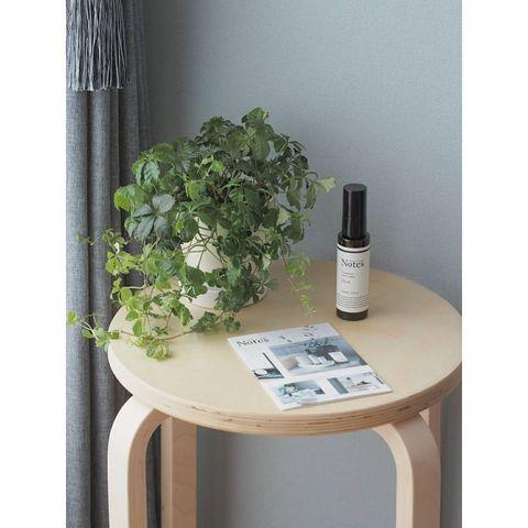 北欧インテリアにおすすめの観葉植物6