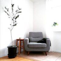 北欧インテリアに合う観葉植物って?お部屋の雰囲気を統一するポイントをご紹介