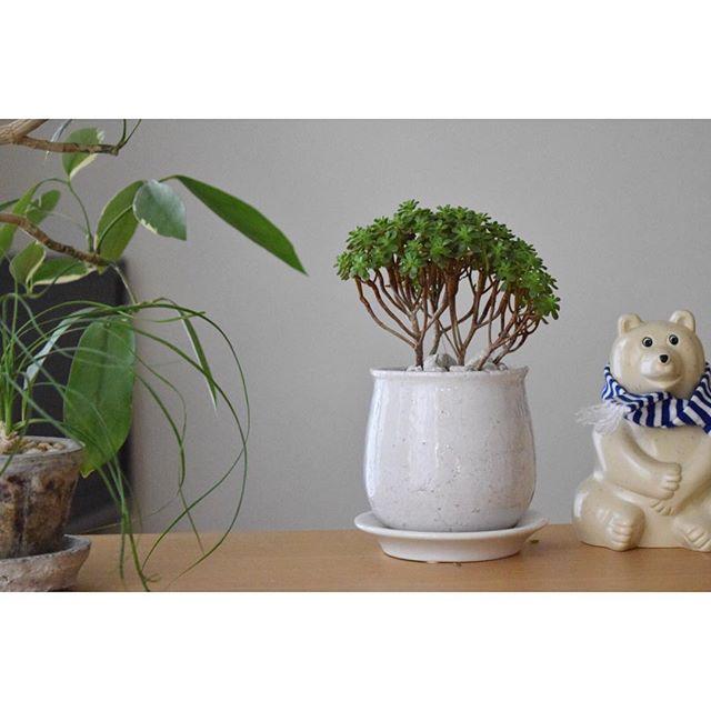 風水 多肉植物 キッチン3