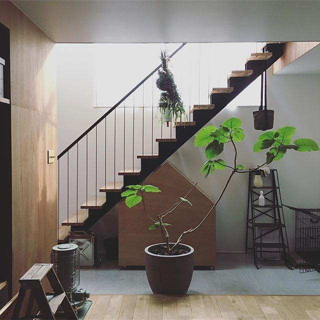 大きな観葉植物を使った癒しのお部屋