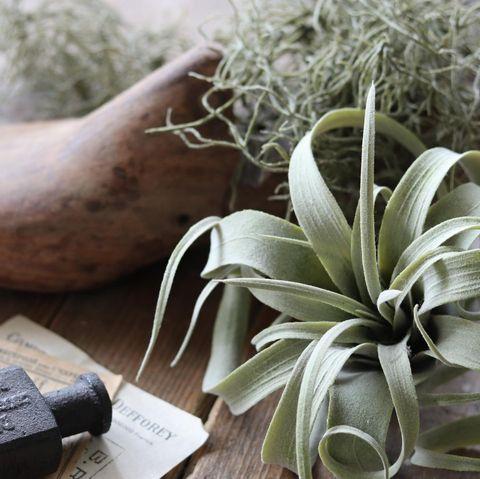 北欧インテリアにおすすめの観葉植物10