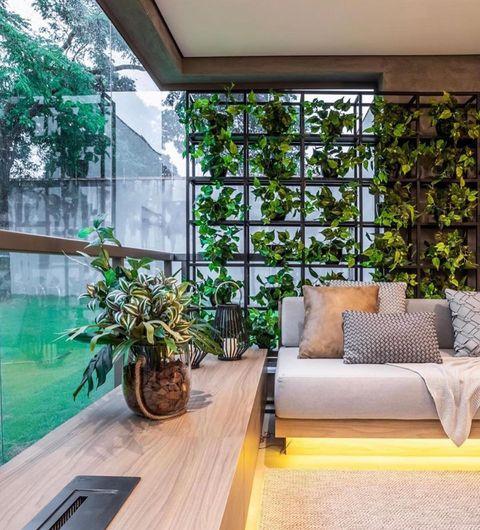 窓前の植物