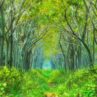 美しく静かな日本の森16選。喧騒から離れた自然豊かな空間で心を癒そう