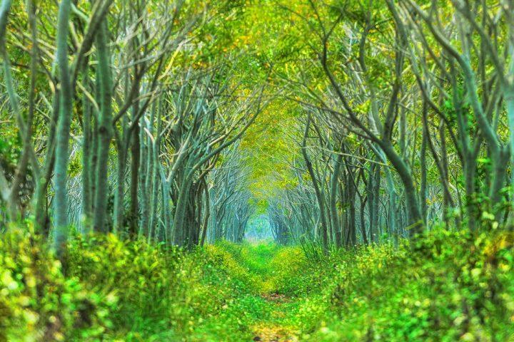 狭山丘陵 トトロの森