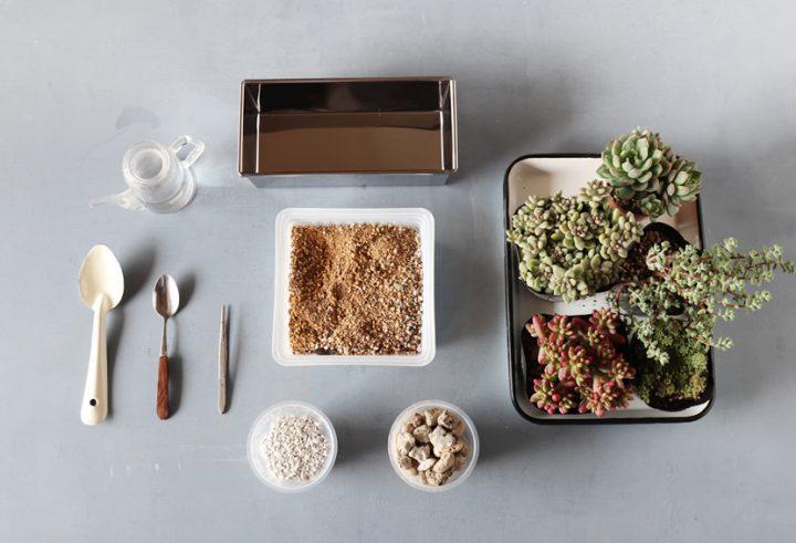 材料はセリアの「ケーキ型」と多肉植物で!