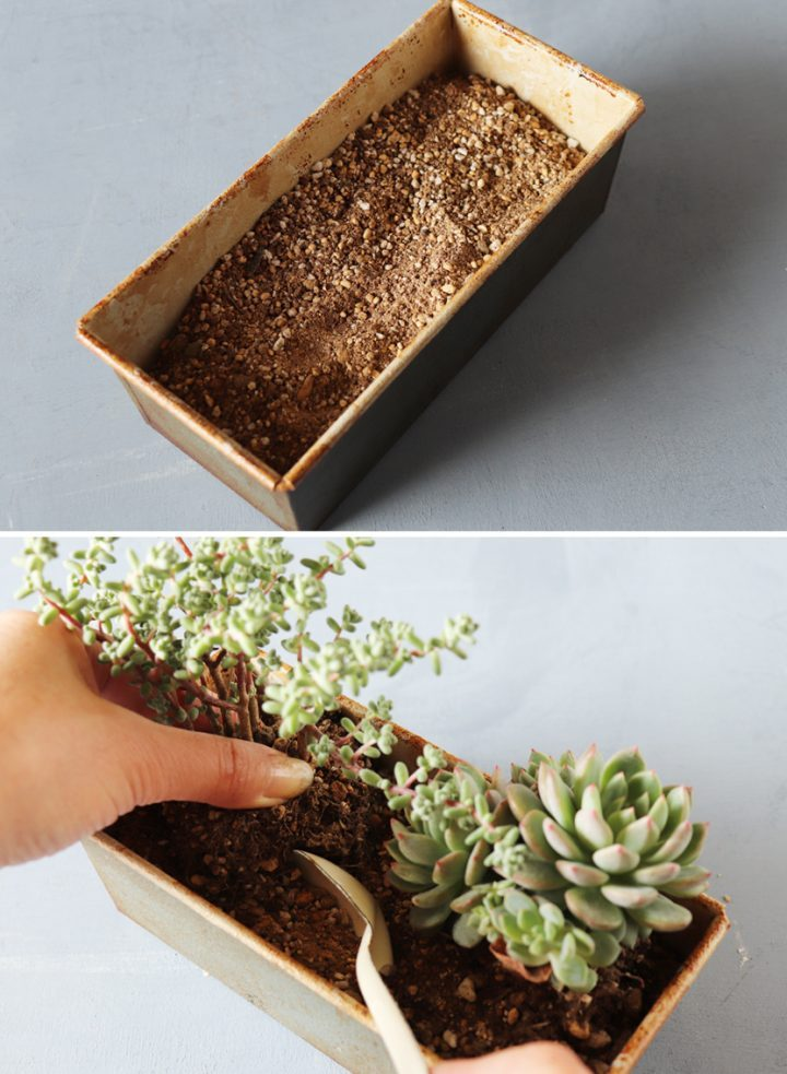 組み合わせが楽しい「フォレスト風寄せ植え」の作り方2