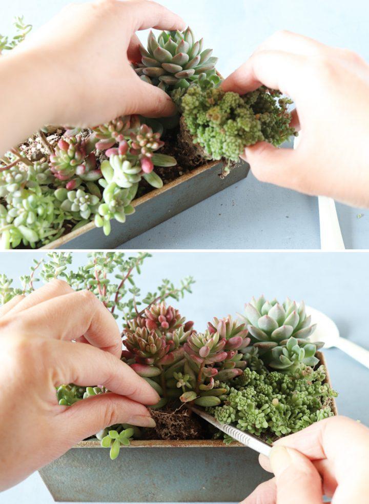 組み合わせが楽しい「フォレスト風寄せ植え」の作り方4