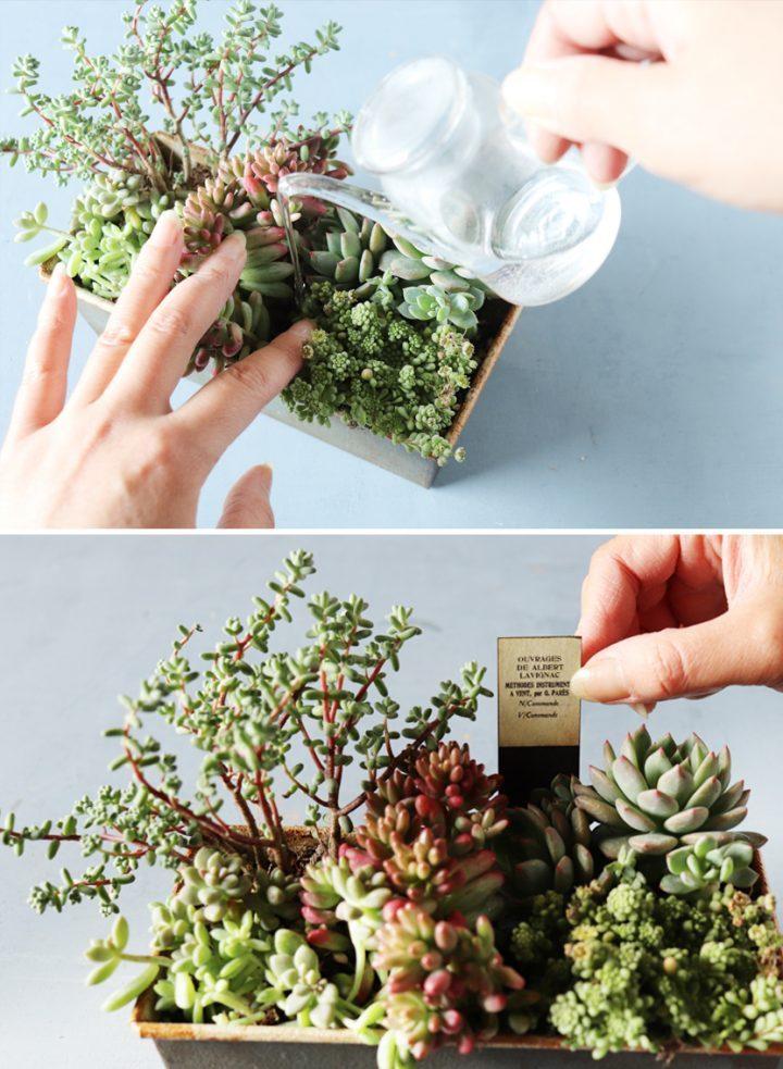 組み合わせが楽しい「フォレスト風寄せ植え」の作り方5
