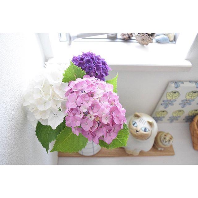 花のある生活4