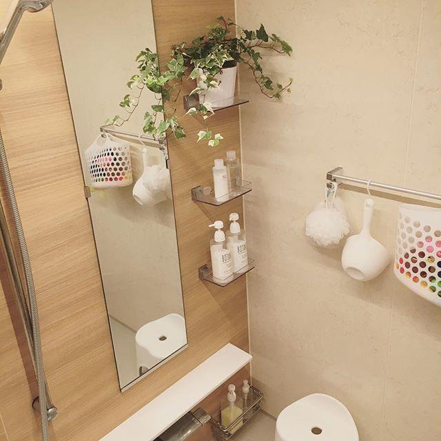 お風呂に置けるおすすめ観葉植物アイビー