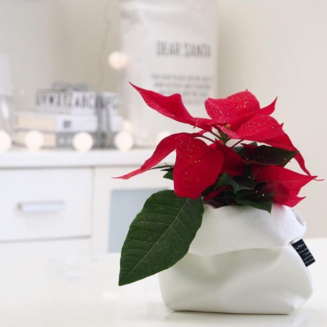 冬の花の美しい和名「猩猩木」
