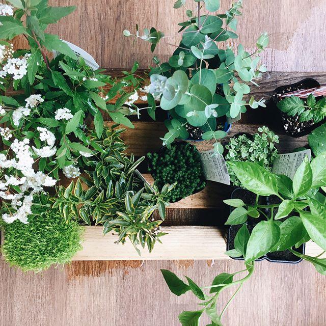 40代から始める趣味「家庭菜園」