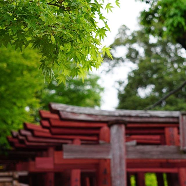 40代から始める趣味「神社仏閣巡り」