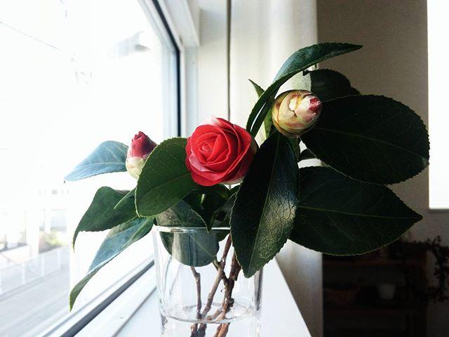 冬の花の美しい和名「海柘榴」