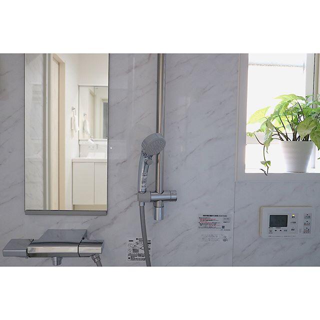 お風呂のおすすめ観葉植物シンゴニウム