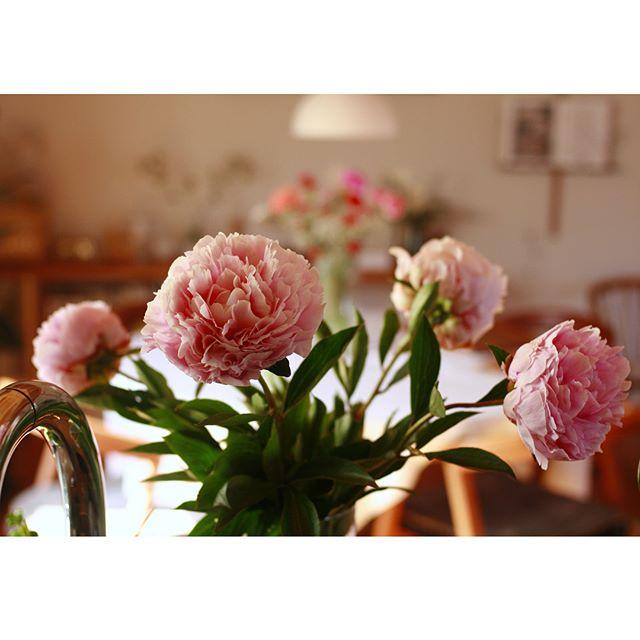 春の花の美しい和名「麝香撫子」