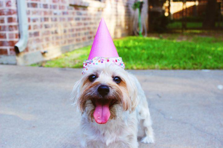 「安心と安全性」で選ぶ誕生日プレゼント