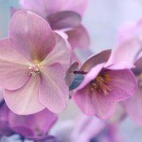 縁起のいいお花を集めました。和〜洋まで飾るだけで幸せになれそうな花々をご紹介