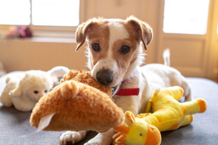 「愛犬の好きなもの」で選ぶ誕生日プレゼント