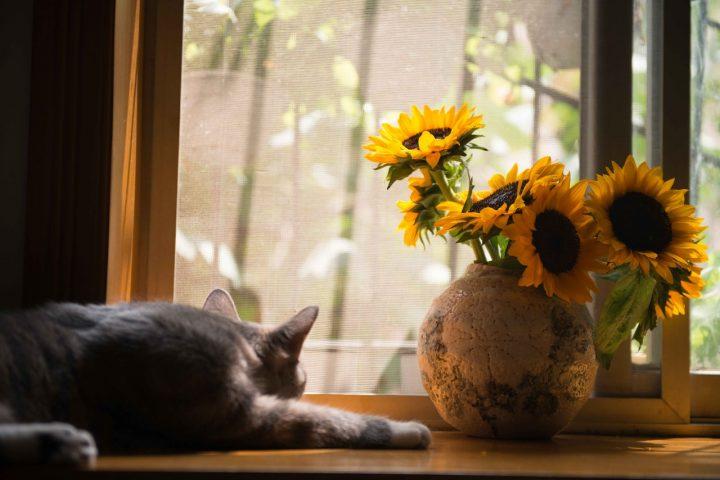 夏の花の花言葉《7月》