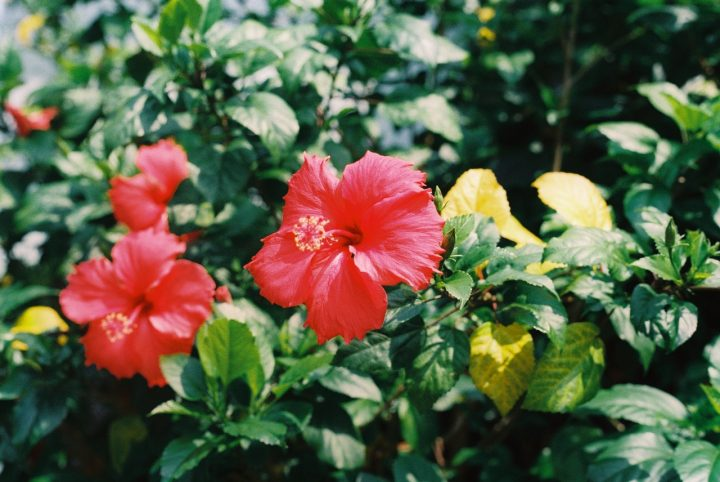 夏の花の花言葉《8月》