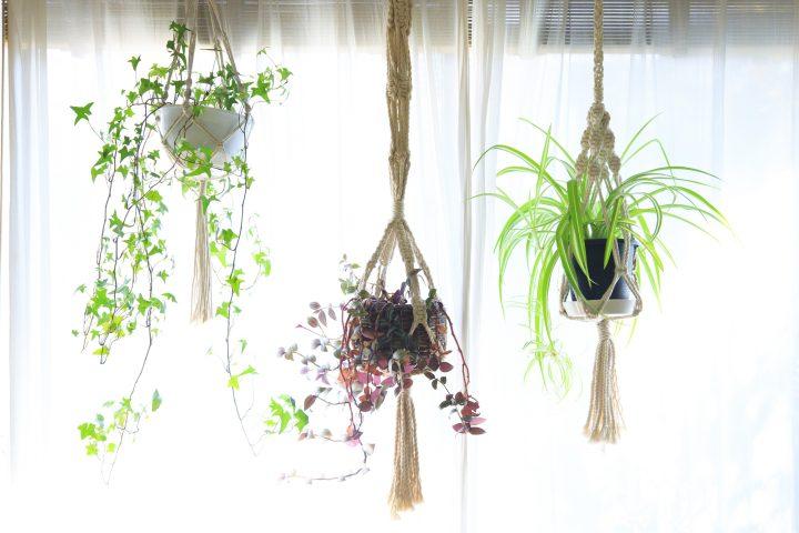 高低差を活かしてグリーンを楽しむ。「吊るす」のに向いている観葉植物5選