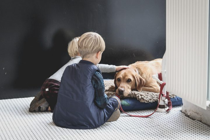 「愛犬の年齢や体調」で選ぶ誕生日プレゼント