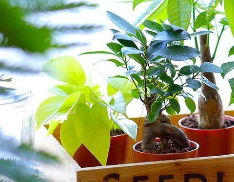 小さめ観葉植物4