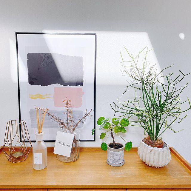 小さめ観葉植物6