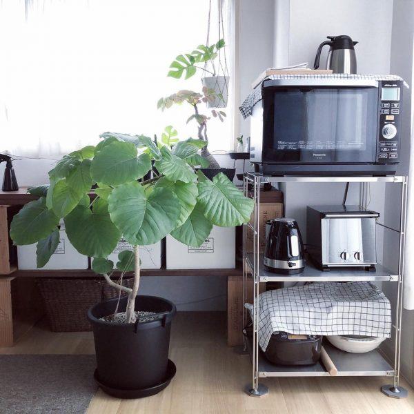 植物が喜ぶ、日当たりの良いワンルーム4