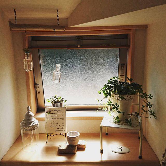 小さめ観葉植物13