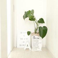 日陰でも育つ観葉植物5選。日常にちょっとした緑を取り入れてみませんか?