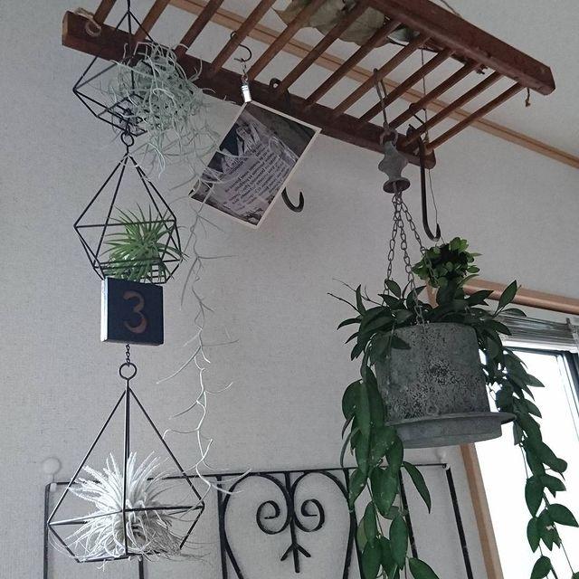 小さめ観葉植物5