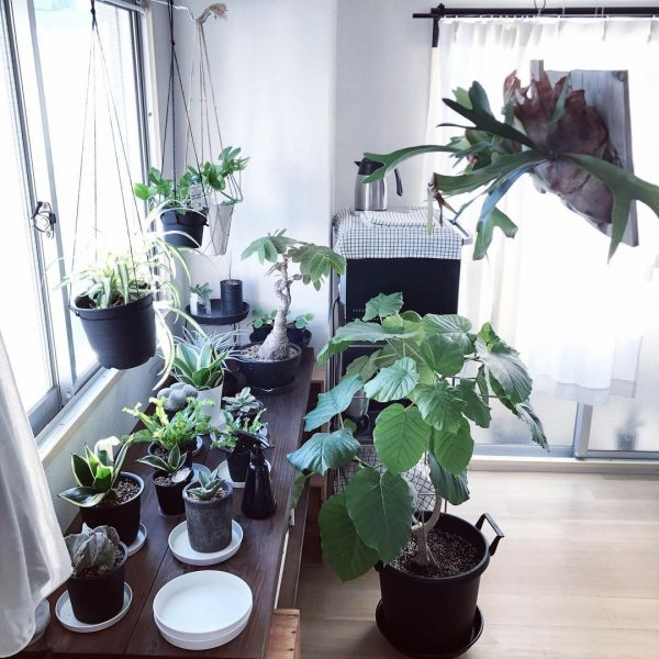 植物が喜ぶ、日当たりの良いワンルーム2