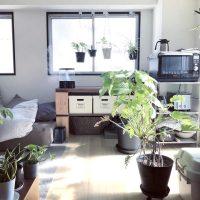 たくさんのグリーンと暮らす。日当たりの良いワンルームの一人暮らしインテリア