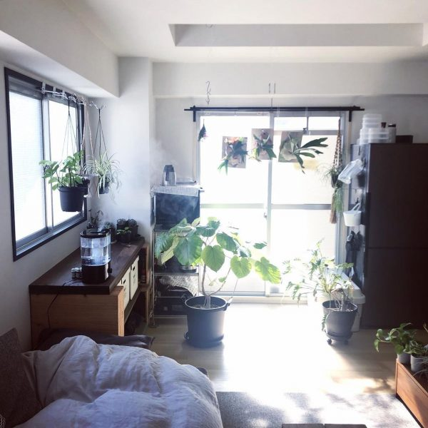 植物が喜ぶ、日当たりの良いワンルーム