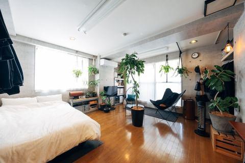 真ん中の植物が良い部屋
