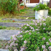草花をもっと愛せる素敵な庭作りのコツをご紹介。難しくないおしゃれに見せる方法