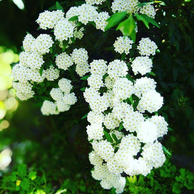 美しいを表現する素敵な言葉「楚々」