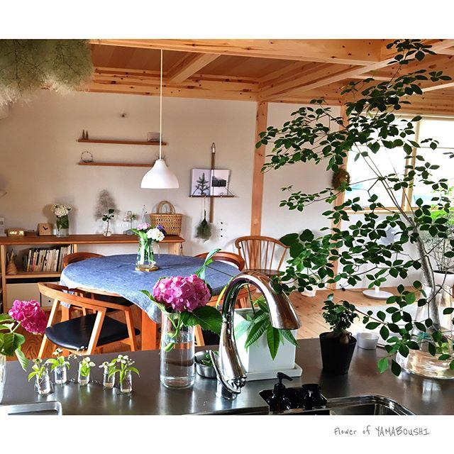 《キッチン》植物をおしゃれに飾った空間
